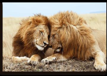 panel-acustico-lions
